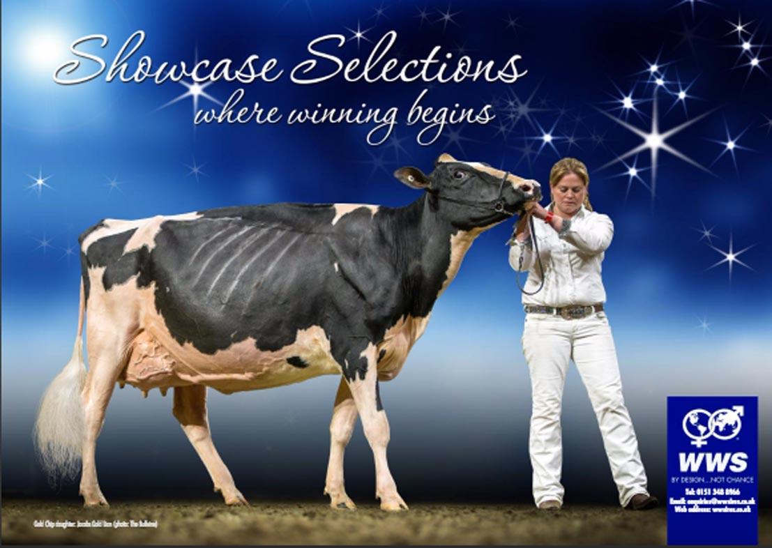 Showcase Bull Brochure